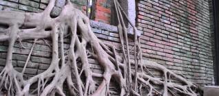 Rumah Pohon di Tainan